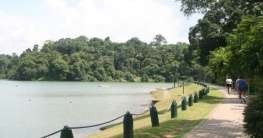 MacRitchie – Lower and Upper Peirce Reservoirs