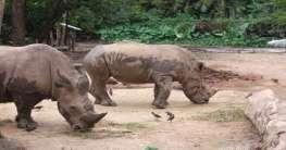 Zoo in Singapur